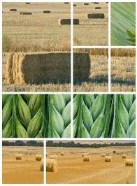 Castilla la Mancha  fomento de la calidad agroalimentaria